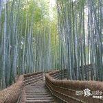 幽玄の世界に酔う、竹林と石仏のお寺「化野念仏寺」【京都】