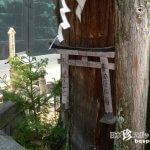 清水寺の中にある恐怖スポット・呪いの杉の木「地主神社」【京都】
