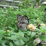 蝶が舞い飛ぶ! まるでこの世の楽園「多摩動物公園・昆虫園」【東京】
