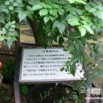 癒されるけど本当は怖い「東京都薬用植物園」【東京】