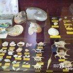 歴代藩主も訪れた3万点の貝コレクション「貝寺・本覚寺」【和歌山】