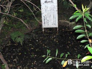 美女がヘビに引きずり込まれる底なし沼とは「浮島の森」【和歌山】