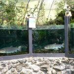 日本最大の淡水魚イトウと匠の館「森の水族館」【岐阜】
