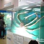 ほのぼの系アットホーム水族館「竹島水族館」【愛知】