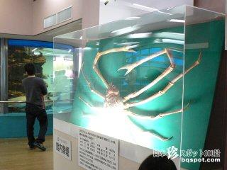 なごむ〜! ほのぼの系アットホーム水族館「竹島水族館」【愛知】