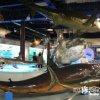 色鮮やかな水のない水族館「海とくらしの史料館」【鳥取】