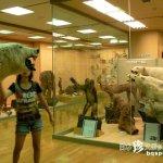 東洋剥製博物館の残り香「きしわだ自然資料館」【大阪】