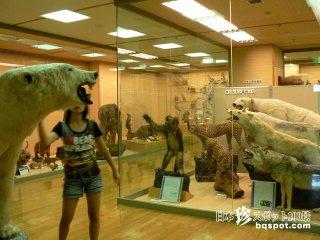 名珍スポット・東洋剥製博物館の残り香「きしわだ自然資料館」【大阪】