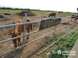 世界でたった30頭しかいない孤独な在来馬「宮古島牧場」【宮古島】