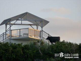 宮古島の珍モニュメント6「マリンガーデンの牛」【宮古島】