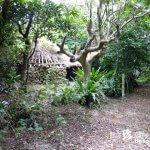 宮古島の人々はどこから来たのか「上比屋山遺跡(ういぴゃーやまいせき)」【宮古島】