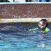 (期間限定)イルカと一緒に泳ぐ夢1「南知多ビーチランド」【愛知】