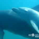 (閉鎖)野生のイルカと泳げる海「能登島ドルフィンスイム」【石川】