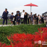 花嫁さんと200万本の曼珠沙華が咲く川辺「彼岸花の花嫁行列」【愛知】