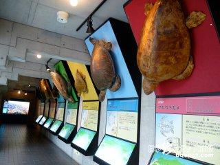 みんなウェルかめ! ウミガメ天国「日和佐うみがめ博物館」【徳島】
