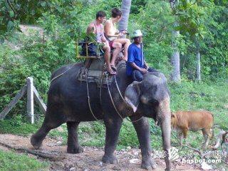 ゾウに乗ってトレッキング「ナンムアンサファリパーク」【タイ】