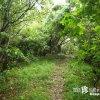 人を食い殺す恐ろしい森「ガーナー森(ムイ)」【沖縄本島】