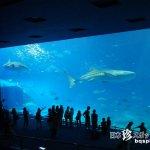 超スーパーメジャーウルトラ観光地「美ら海(ちゅらうみ)水族館」【沖縄本島】