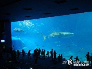 超スーパーウルトラメジャー観光地「美ら海水族館」【沖縄本島】