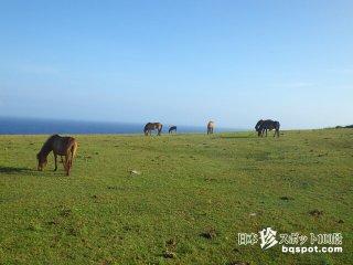 牛と馬が放牧されている世にも美しい断崖絶壁「東崎」【与那国島】