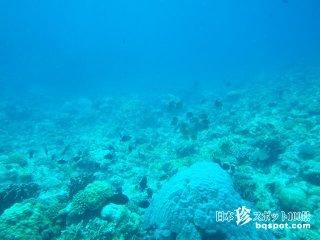 古代の遺跡? 自然の造形物?「与那国海底遺跡」【与那国島】