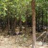 石垣島で最も癒される和みスポット「宮良川のヒルギ林」【石垣島】