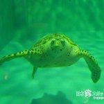 ウミガメが生きる海を守ろう「久米島ウミガメ館」【久米島】