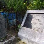 島の不思議植物「宇根の大ソテツ・真謝のちゅら福木」【久米島】