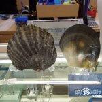 人魚の涙!世界初の黒真珠の養殖に成功「琉球真珠株式会社」【石垣島】