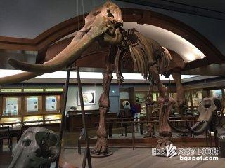 琵琶湖にゾウが棲んでいた!? 湖の歴史と文化「琵琶湖博物館」【滋賀】