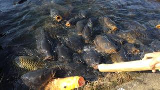 釣り好きお子さん連れご家族の憩いの場「南郷水産センター」【滋賀】