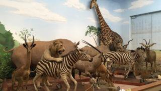 世界各国の野生動物をハンティング「滋賀サファリ博物館」【滋賀】