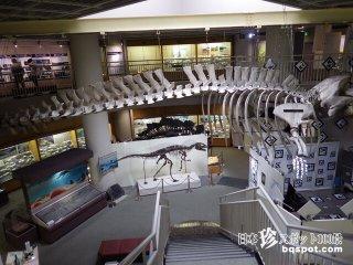 ワンダーいっぱいのレトロ博物館「東北大学総合学術博物館」【宮城】