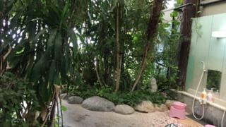 最高すぎる! 密林のノスタルジックホテル「ジャングルパレス」【千葉】