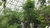 超癒し系! 蝶が乱舞する美しすぎる大温室「伊丹市昆虫館」【兵庫】