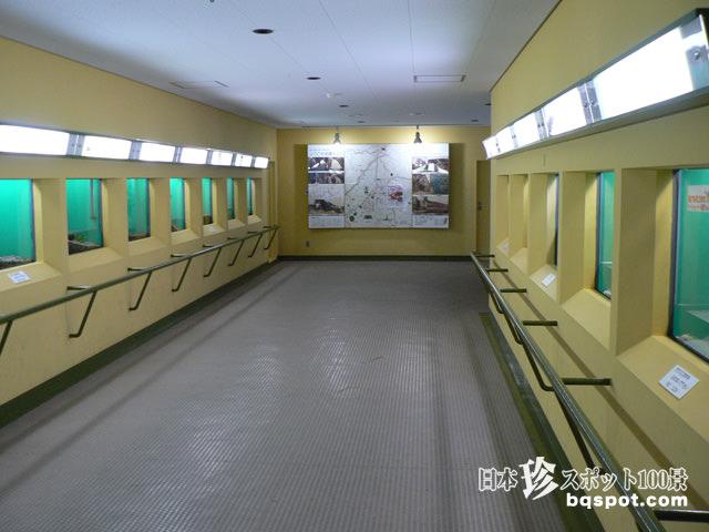 日本オオサンショウウオセンター
