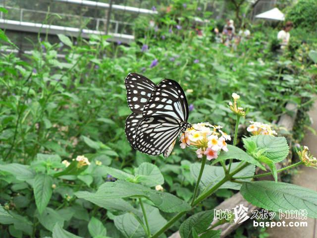 多摩動物公園 昆虫園
