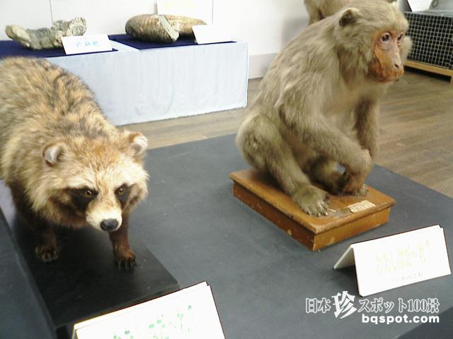 三重県立博物館