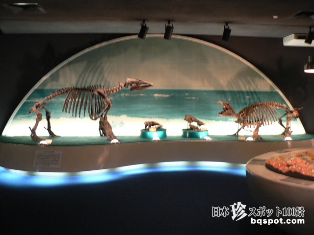 瑞浪市化石博物館