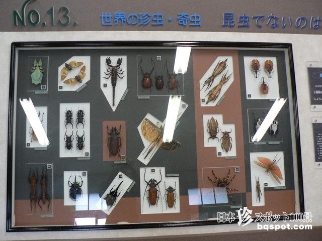 名和昆虫博物館