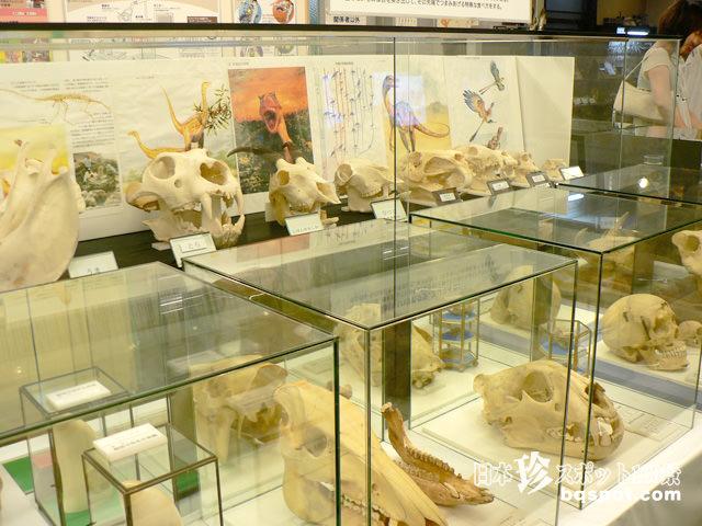 歯の博物館