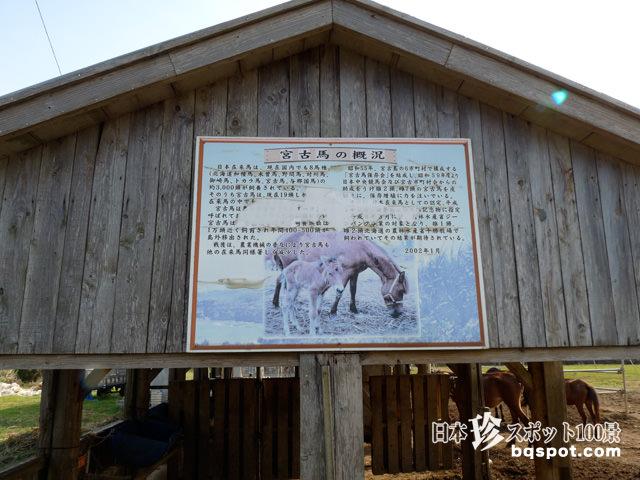 宮古馬牧場