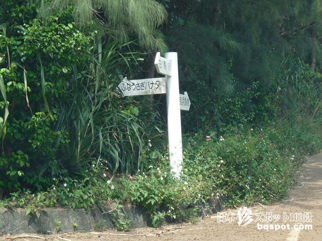 伊良部島のサシバ