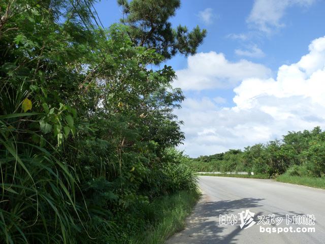 西表島道路