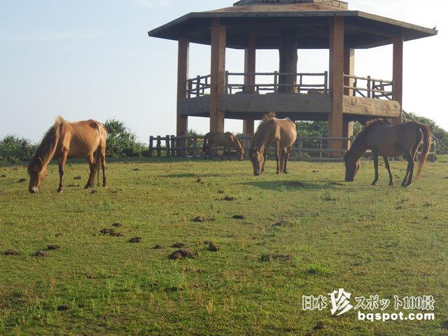 久米島牧場