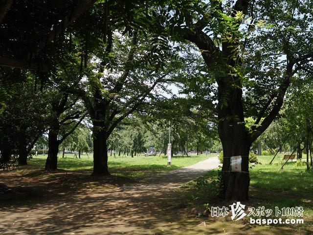 福岡中央公園・新幹線