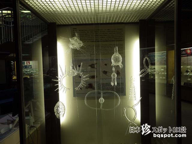 東北大学総合学術博物館
