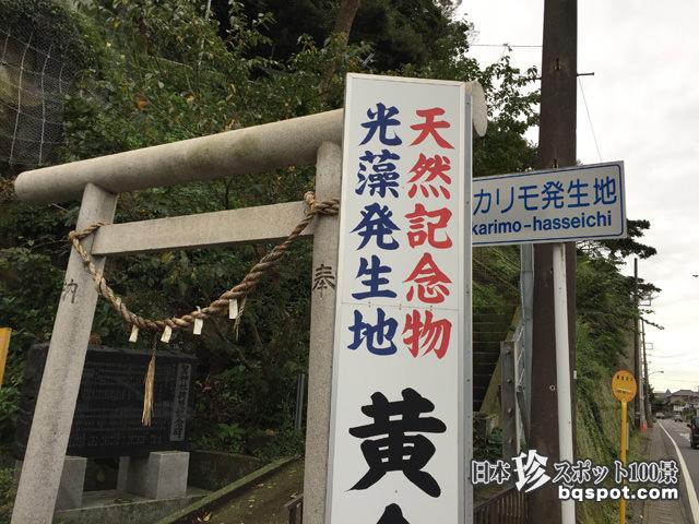 ヒカリモ発生地:黄金井戸